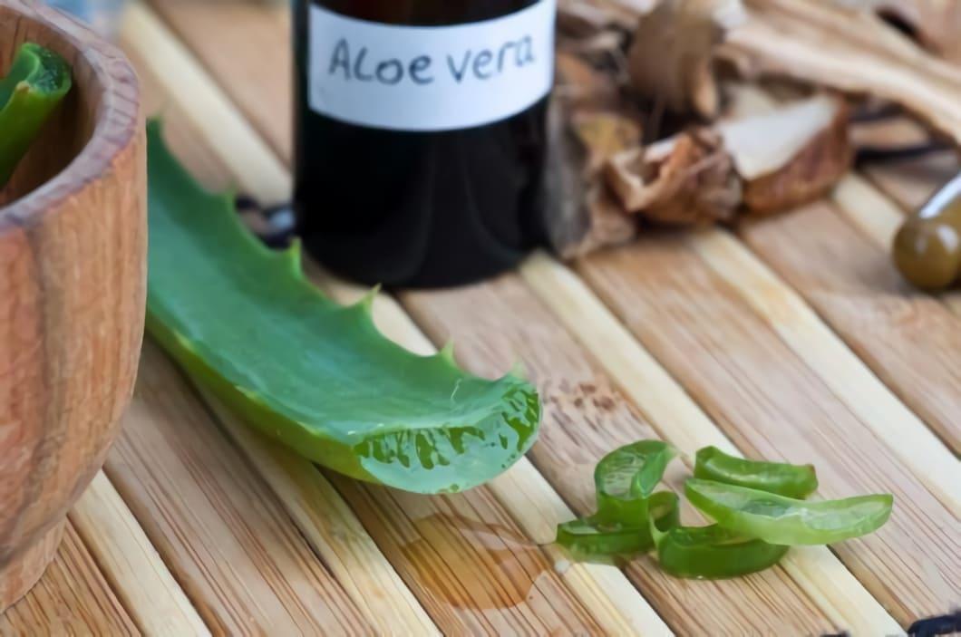 Aloe Vera är en populär växt som har en lång historia av medicinskt användande
