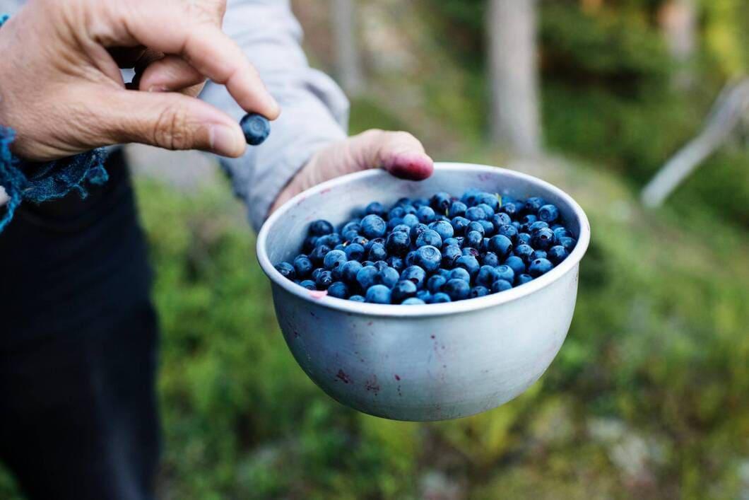 Vad blåbär gör i kroppen