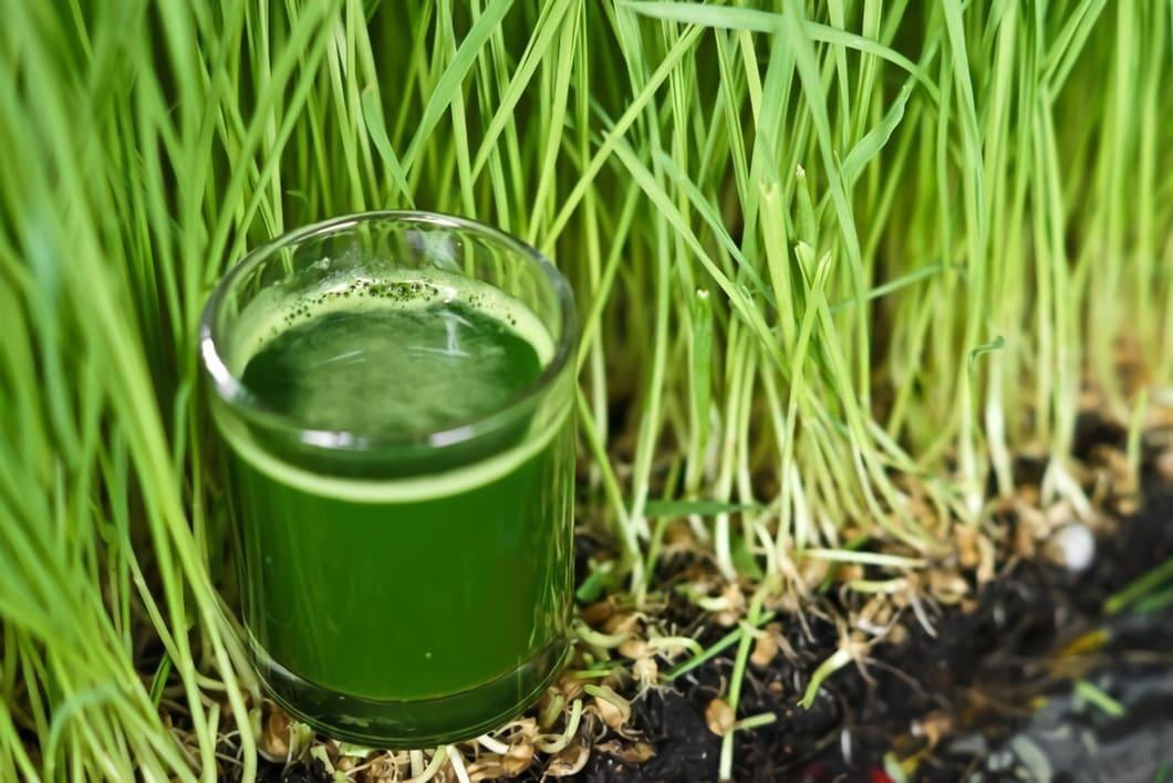 Ett strålande exempel på detta är korngräs som är otroligt näringsrikt