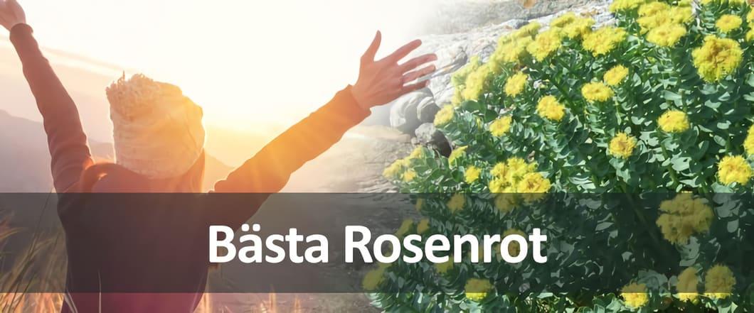 Rosenrot förbättrar nervsystemet och mentala utvecklingsskeden